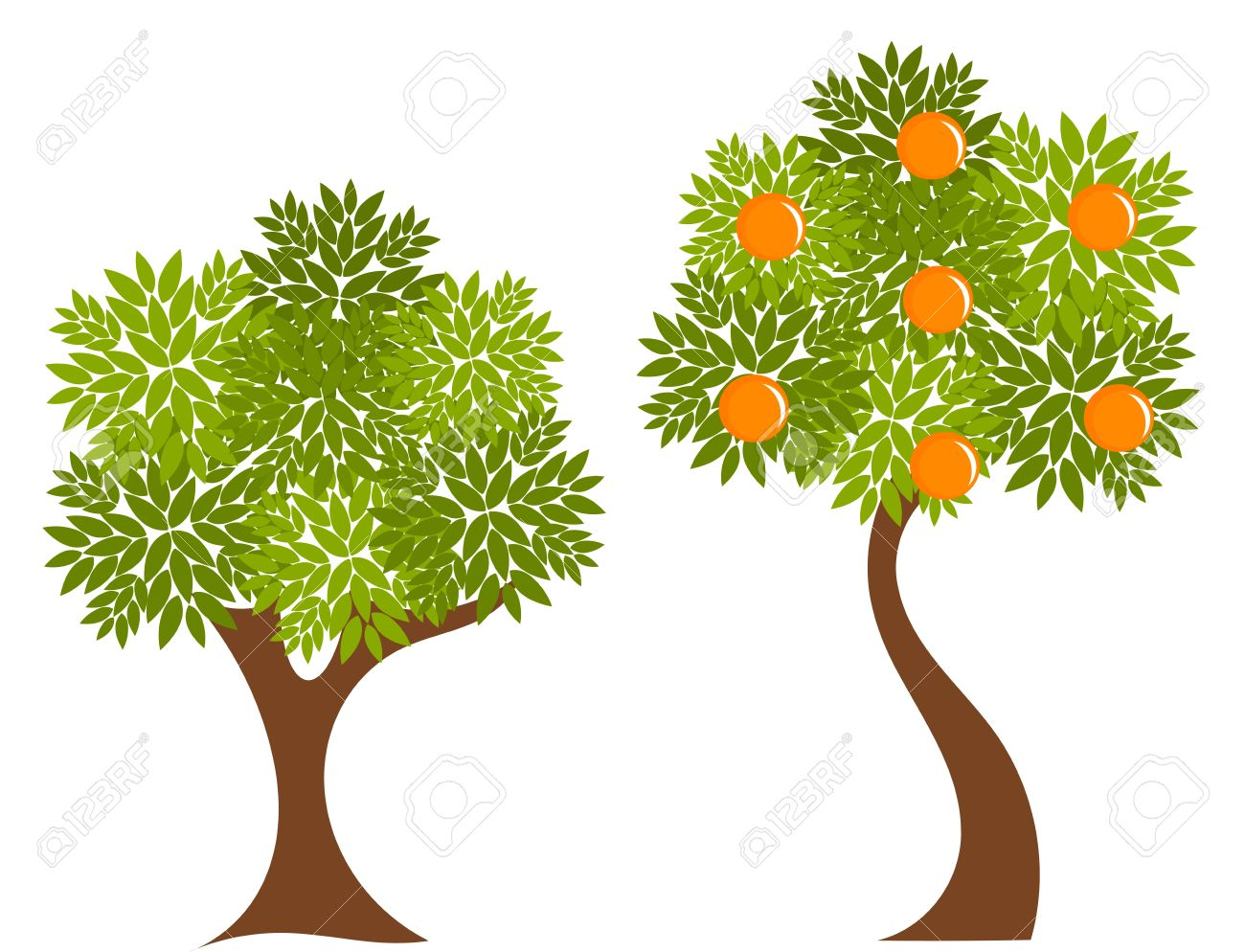 Orange tree illustration Orange Tree Vector