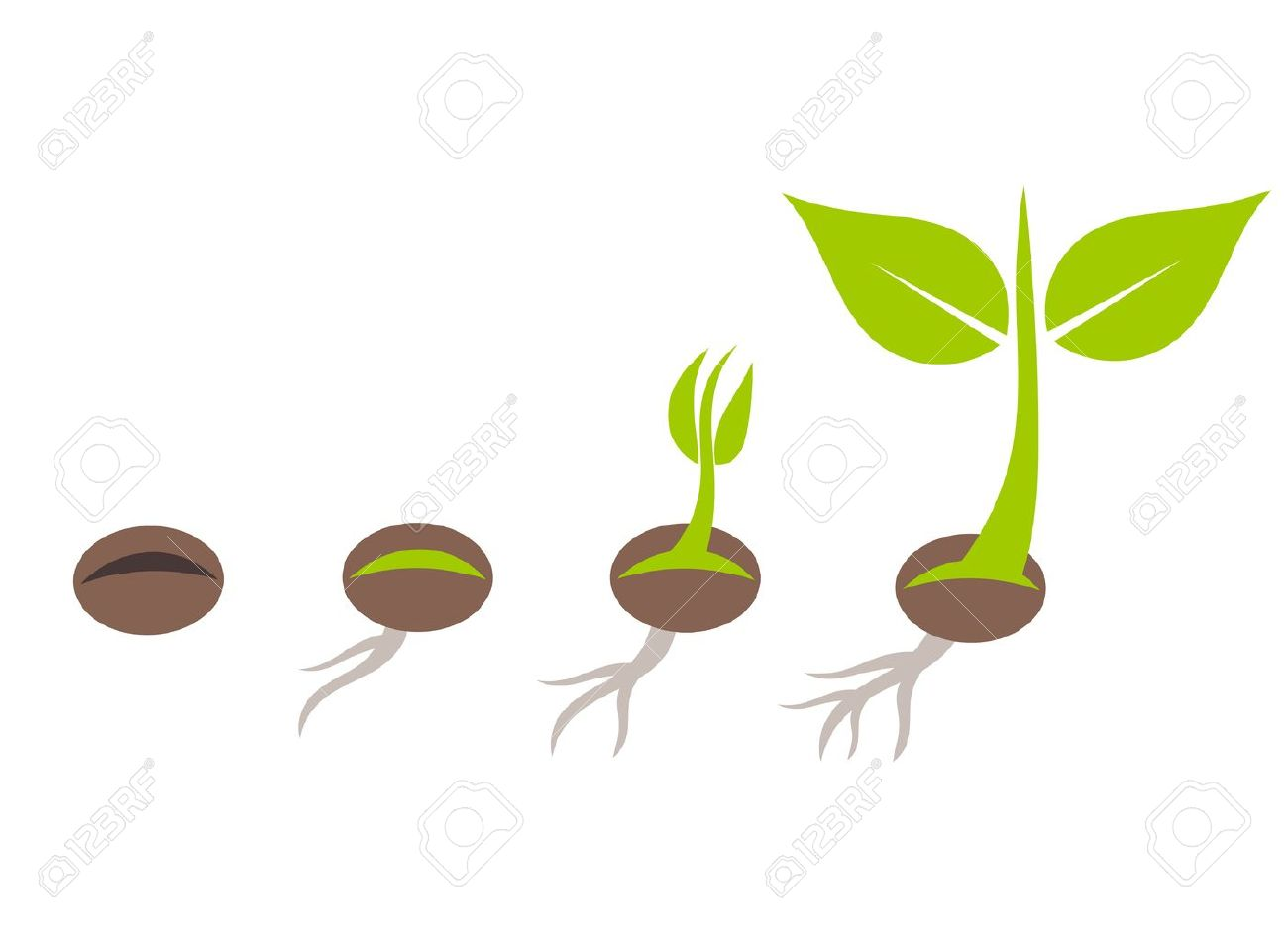 植物種子発芽段階ベクトル イラストのイラスト素材ベクタ Image