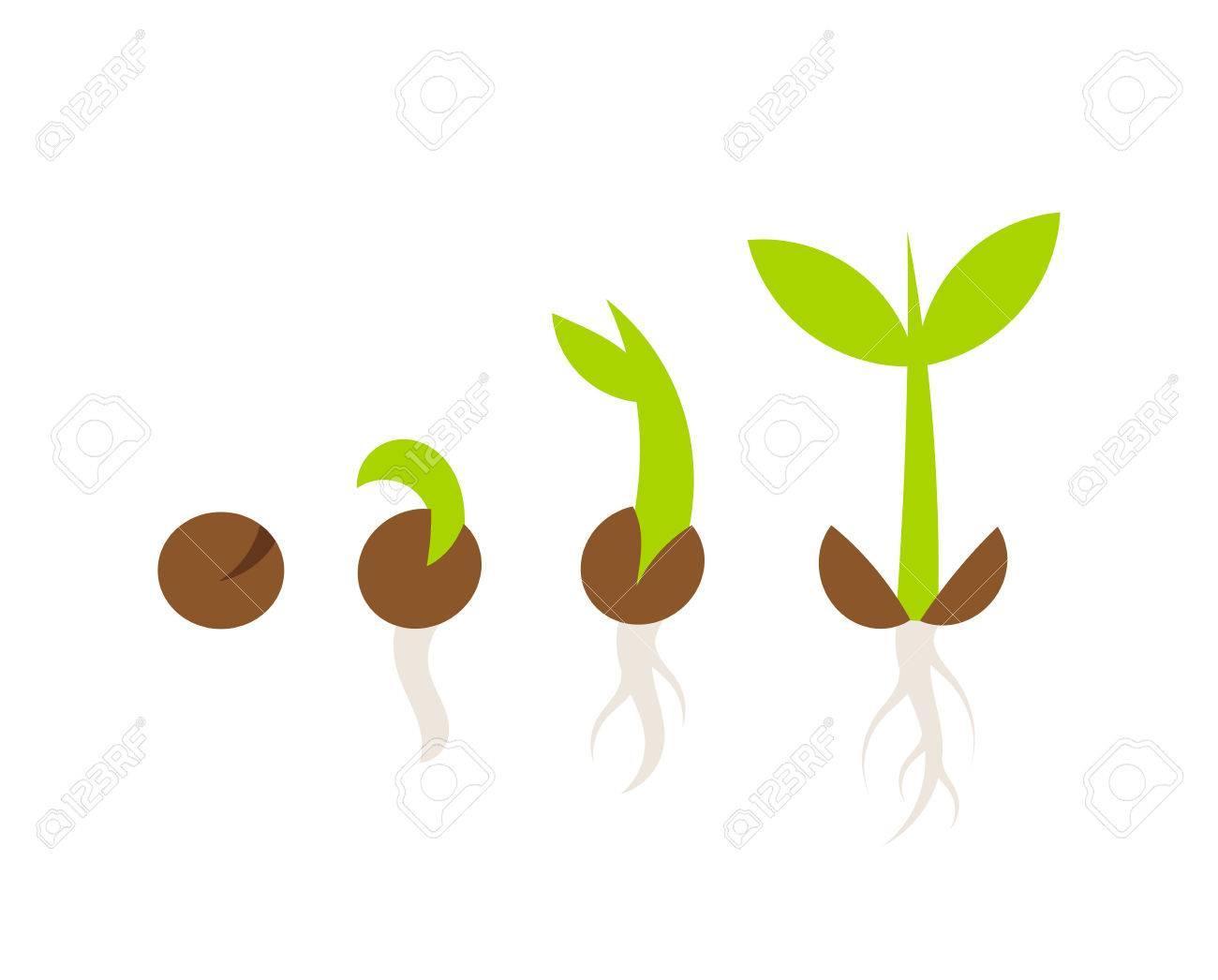 植物の種子の発芽の段階ベクトル図のイラスト素材ベクタ Image