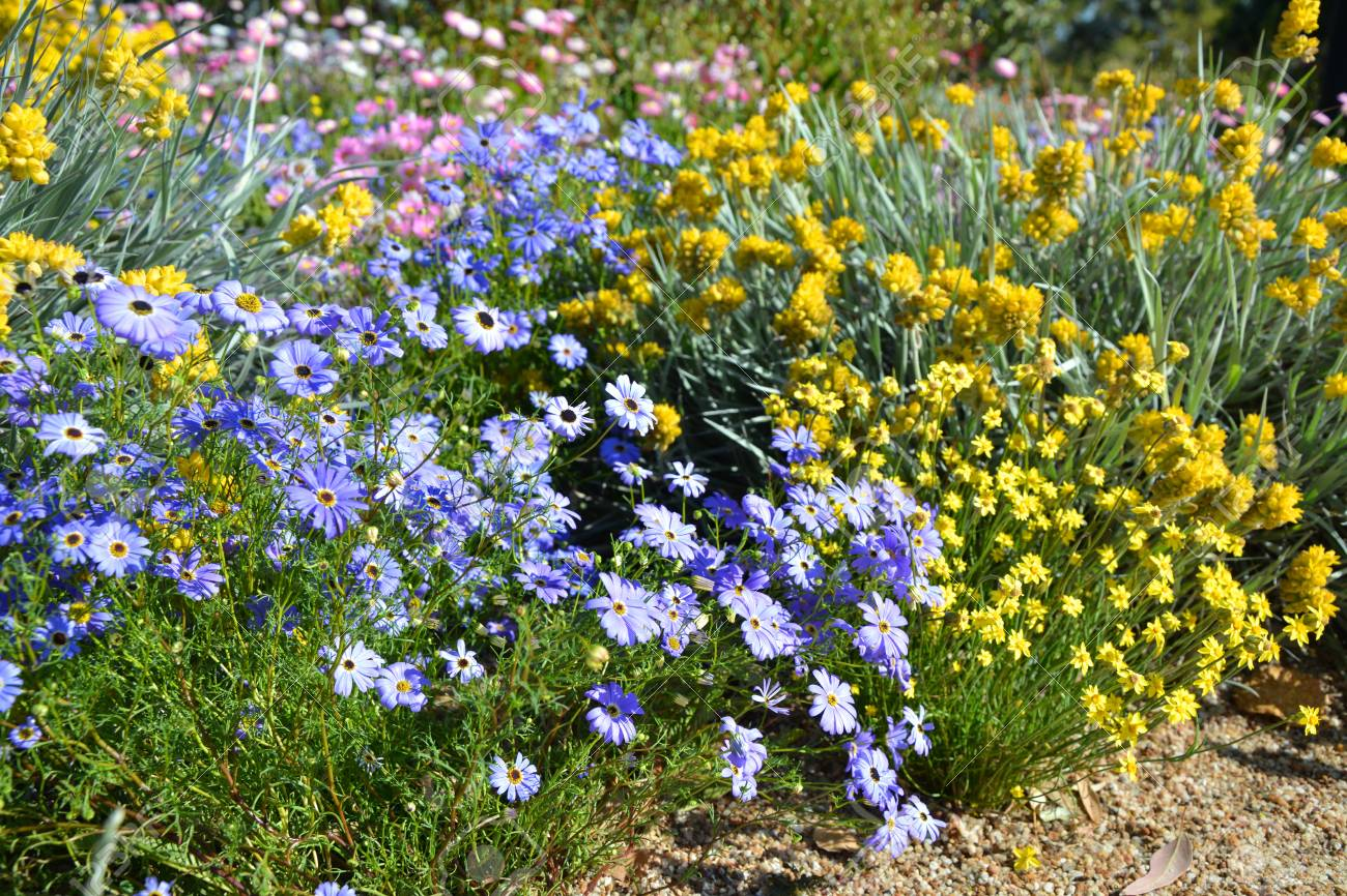 Spring Flower Beds In Kings Park In Perth Western Australia Stock