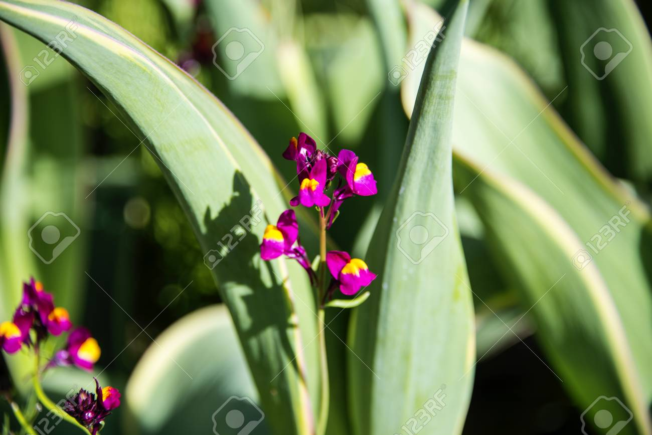 Tiny Purple Flowers Bloom From Between Tall Thick Garden Grass