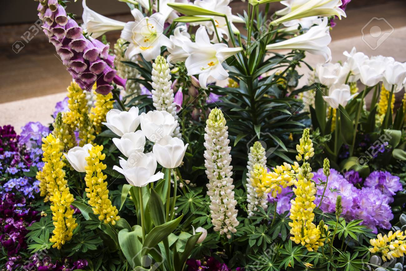 Beautiful Mix Of Tall Creme Purple And Yellow Flowers With Stock