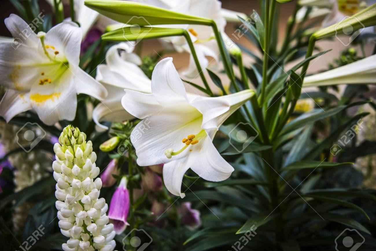White Flowers Opening From Beautiful Flower Stem Amonst White