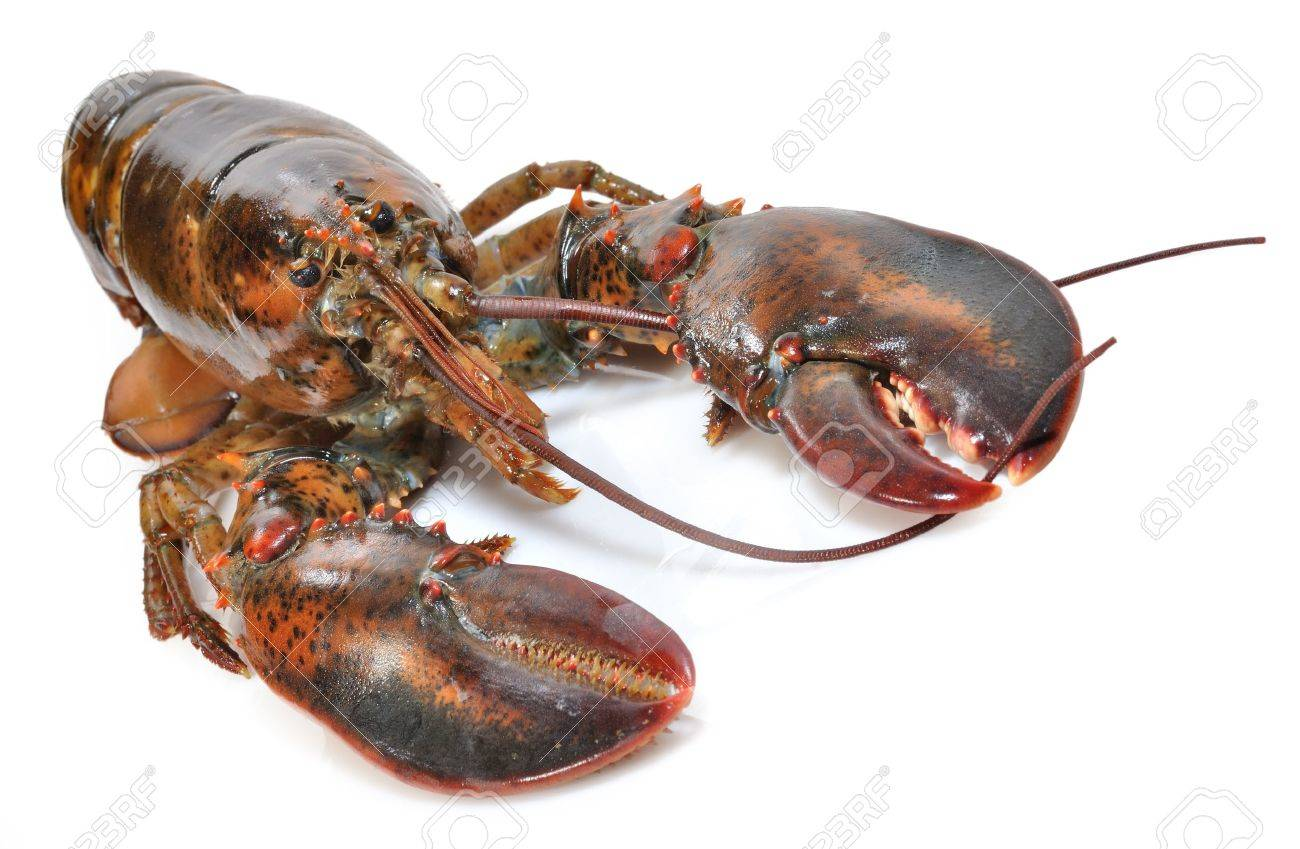 Lobster over white background Stock Photo - 17696411