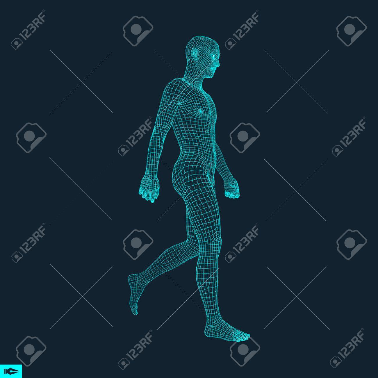 Walking Man. 3D Human Body Model. Geometric Design. Human Body Wire Model. Vector Illustration. - 69659317