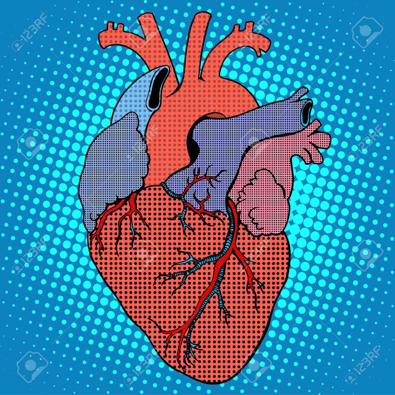 Anatomía Del Corazón Del Estilo Pop Art Retro Humano. Medicina Y ...