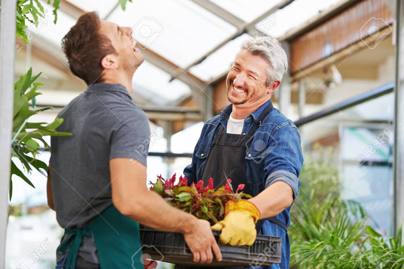 Two men as florists work together in a nursery - 121986910