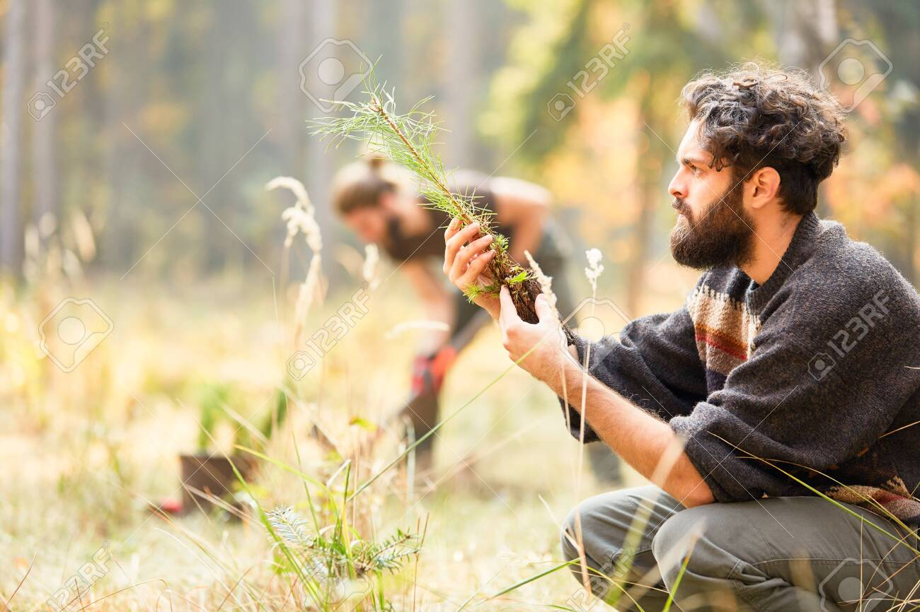 Forest worker controls the quality of pine seedling for afforestation - 124335264