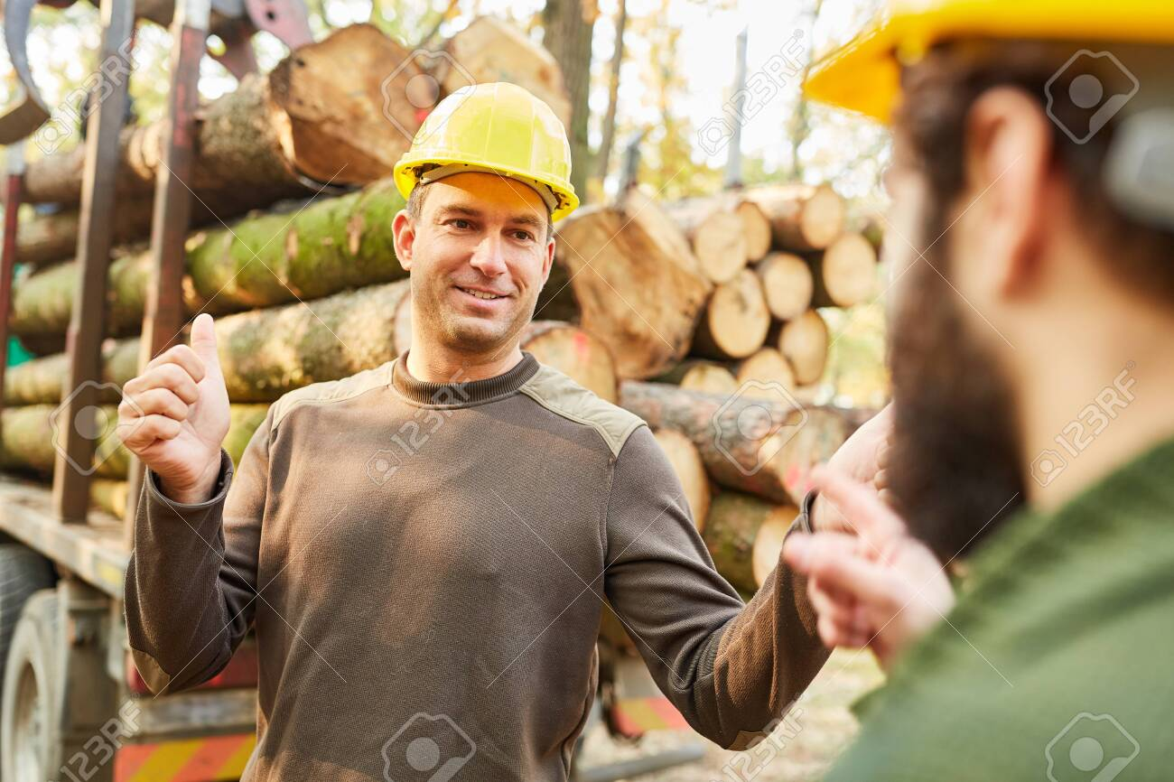 Two forest workers plan transport and loading of the tree trunks together - 144136278