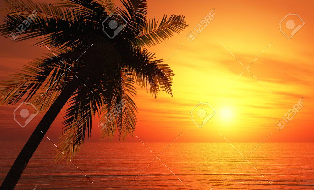 Tropical Greeting Card - The dream beach Stock Photo - 13945459