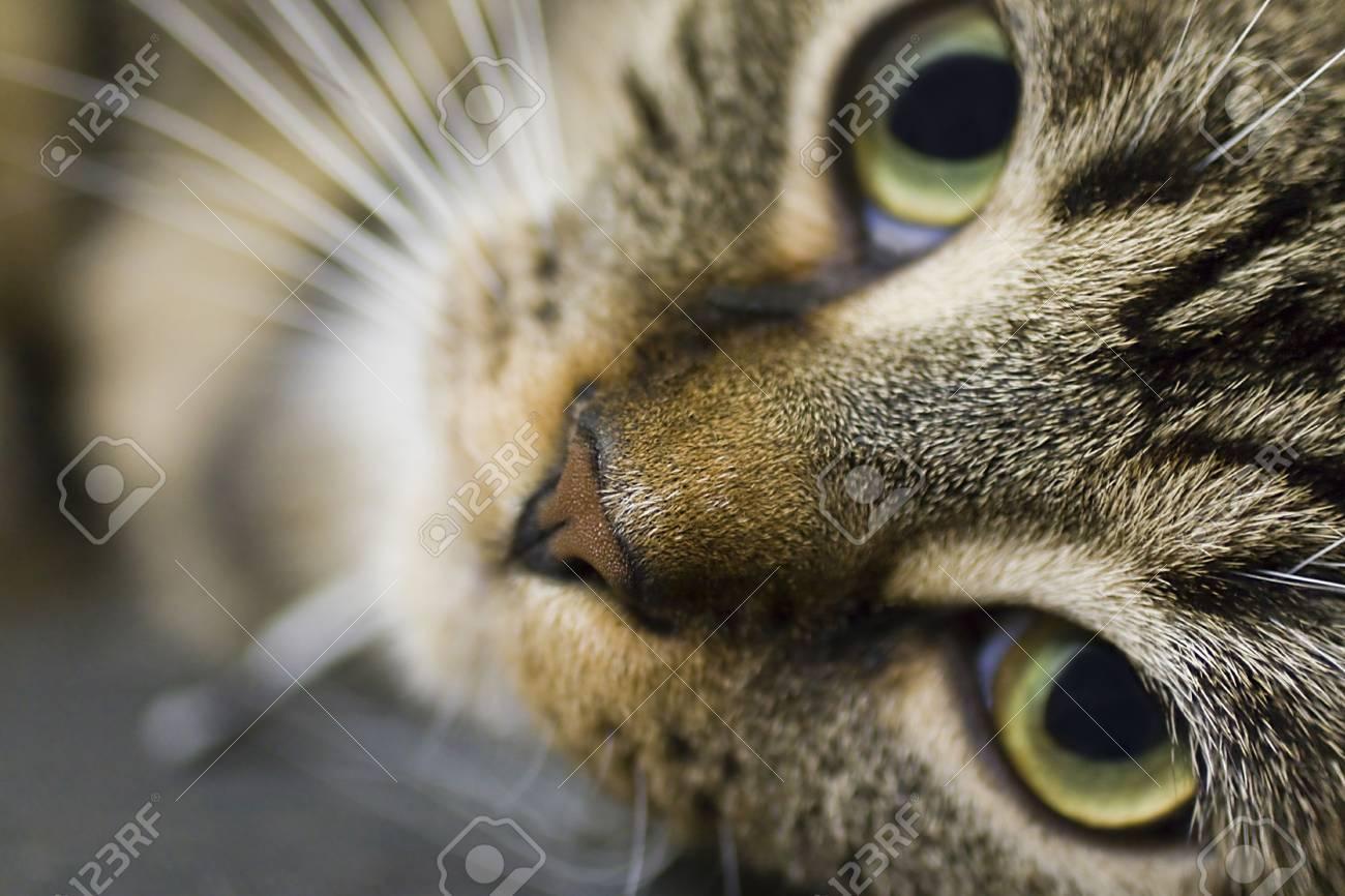Cat portrait - Good looking cat Stock Photo - 14586856