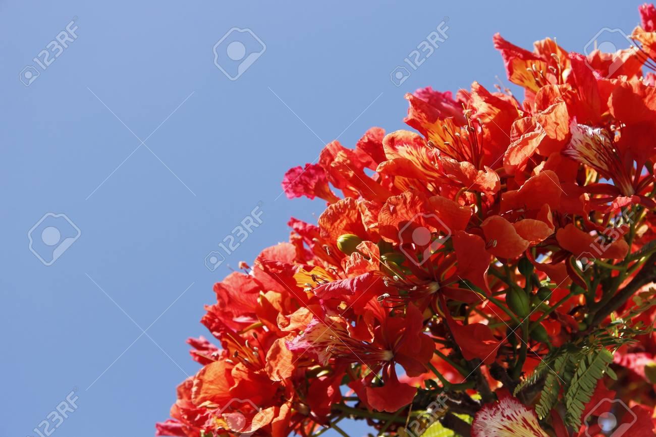 青い空と赤い花 の写真素材・画像素材 Image 16526014.