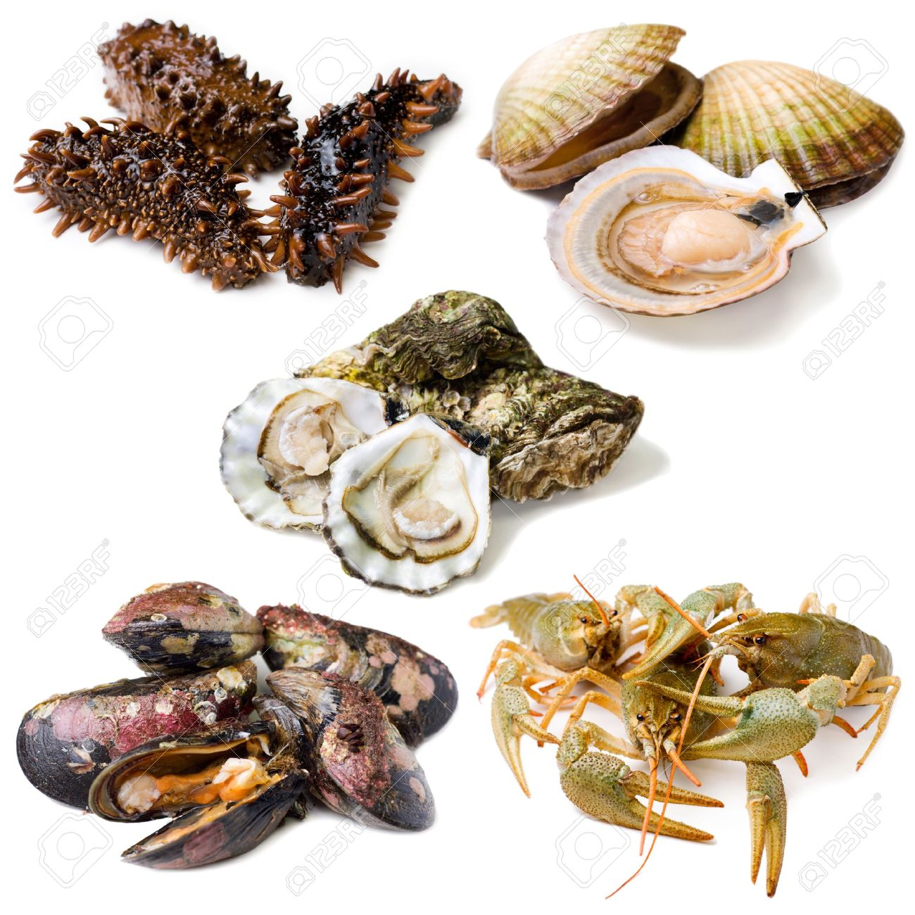 Group of fresh alive seafood: trepang (tripang, stichopus japonicus), scallops (Pecten maximus), oysters, mussels and crawfishes. Isolated on white background. - 14230614