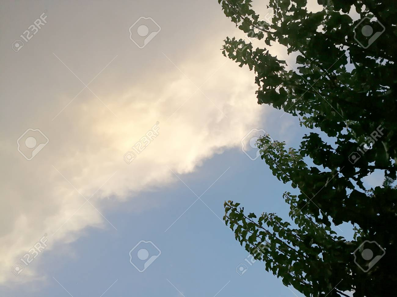 skay, clouds and branches - 84126610