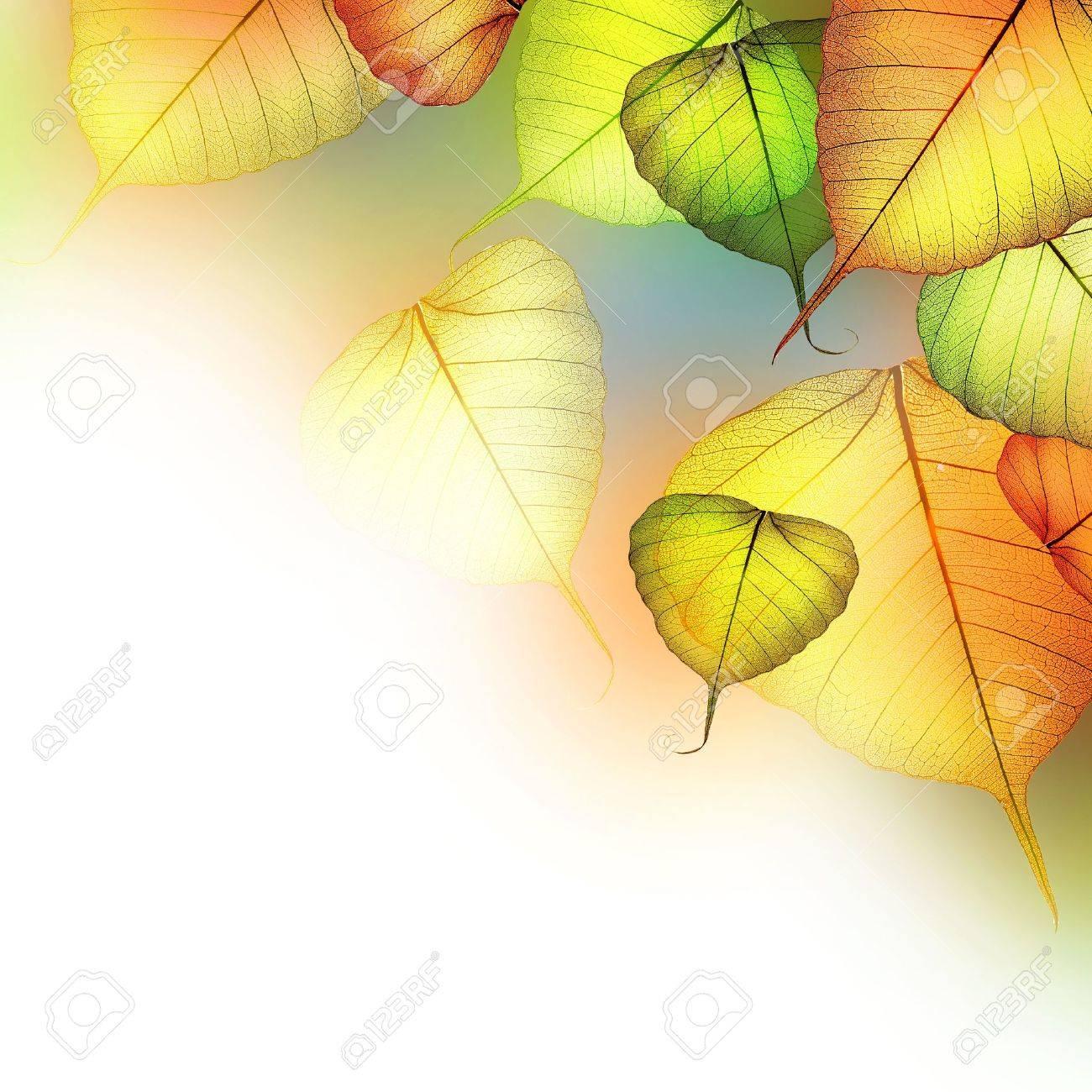 Autumn Stock Photo - 7651594