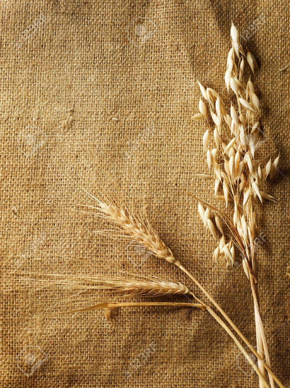 Wheat Ears on Burlap background.Country Style.With copy-space Stock Photo - 7814892