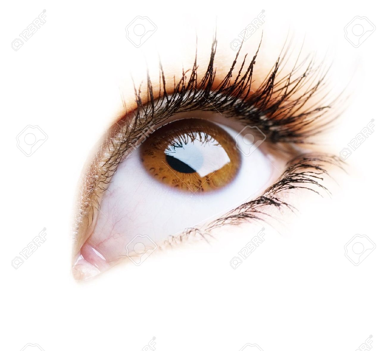 Beautiful Eye of Woman over white background - 7815165