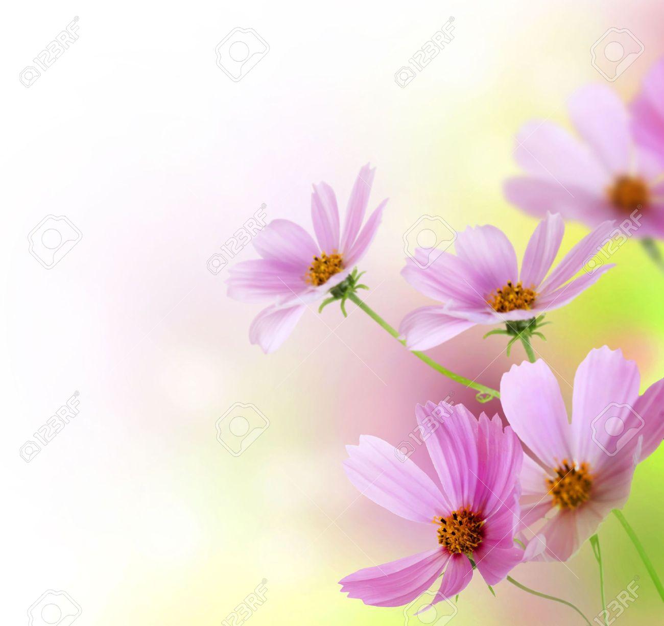 Beautiful Floral Border.Flower design Stock Photo - 7815201