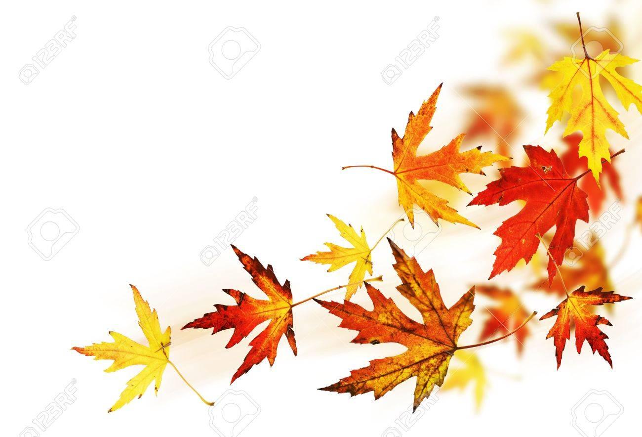 Autumn Leaves Stock Photo - 8045646