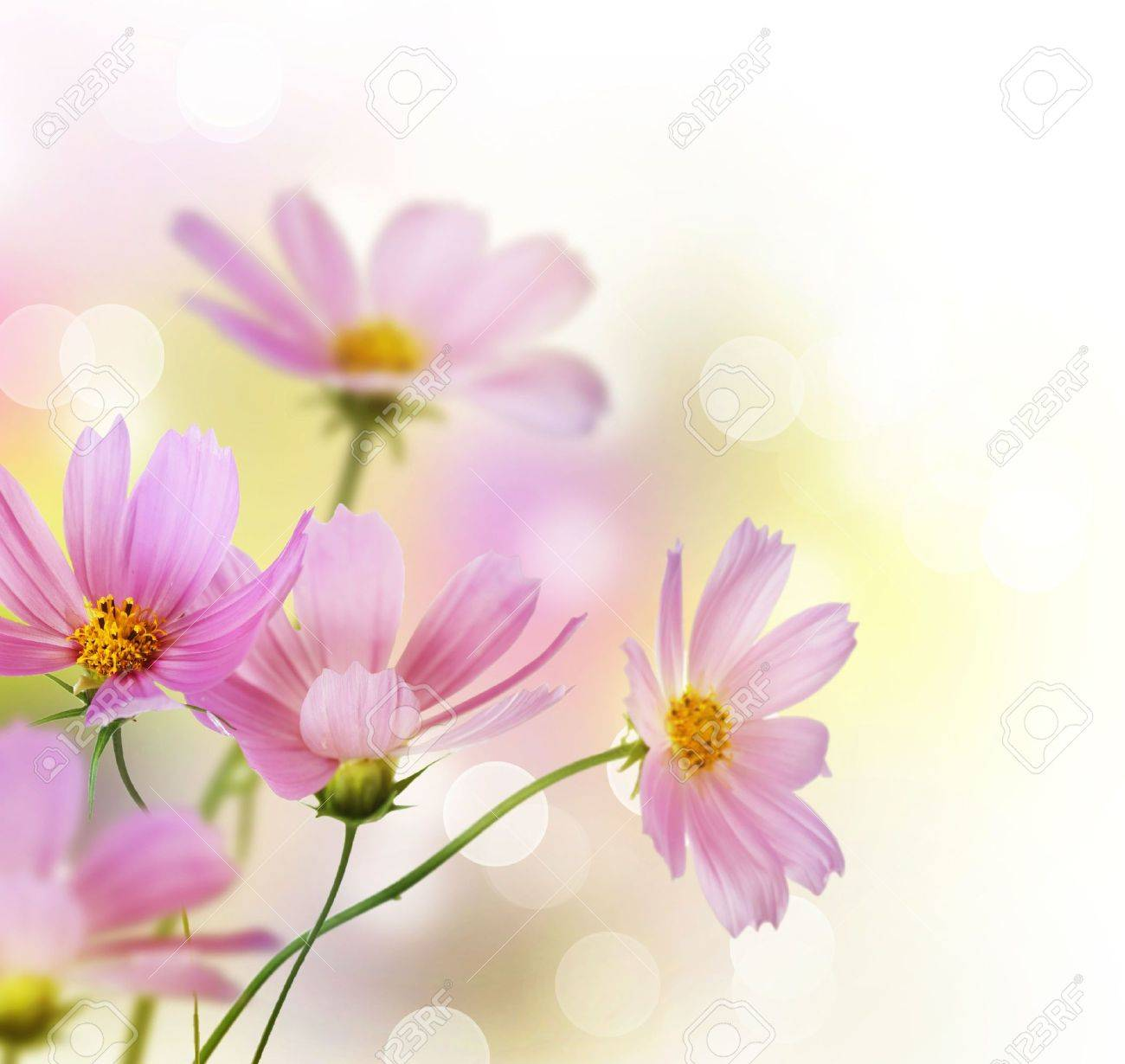 Beautiful Flowers Border over white Stock Photo - 9352674