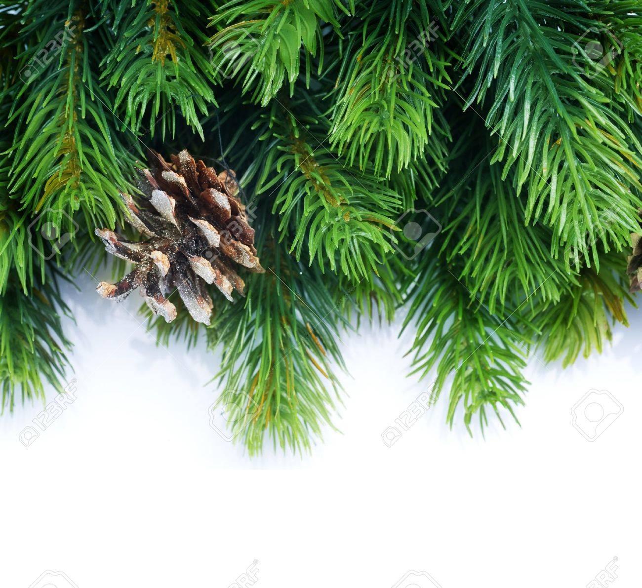Christmas Fir Tree border over white Stock Photo - 9357873