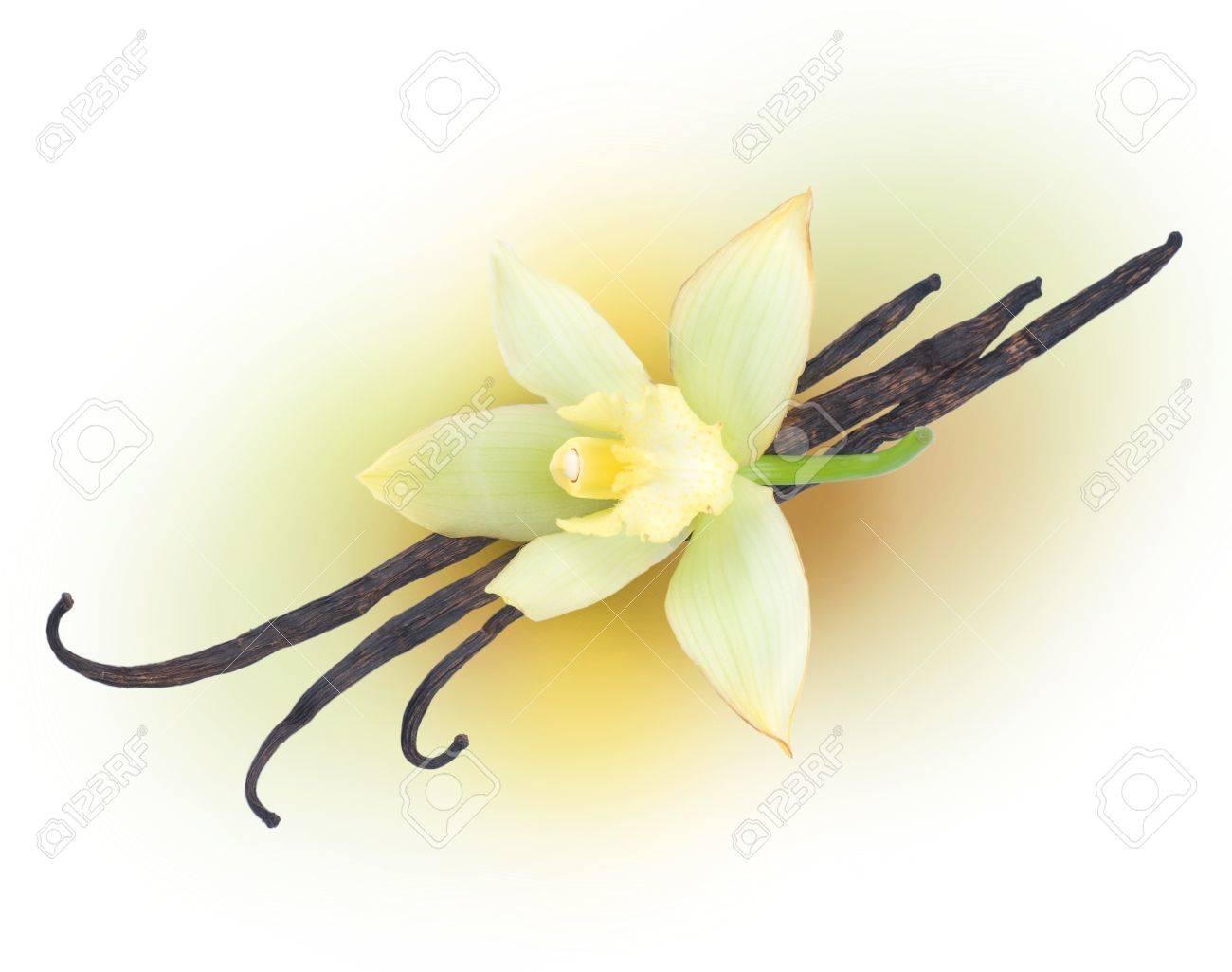 Vanilla Stock Photo - 9378798