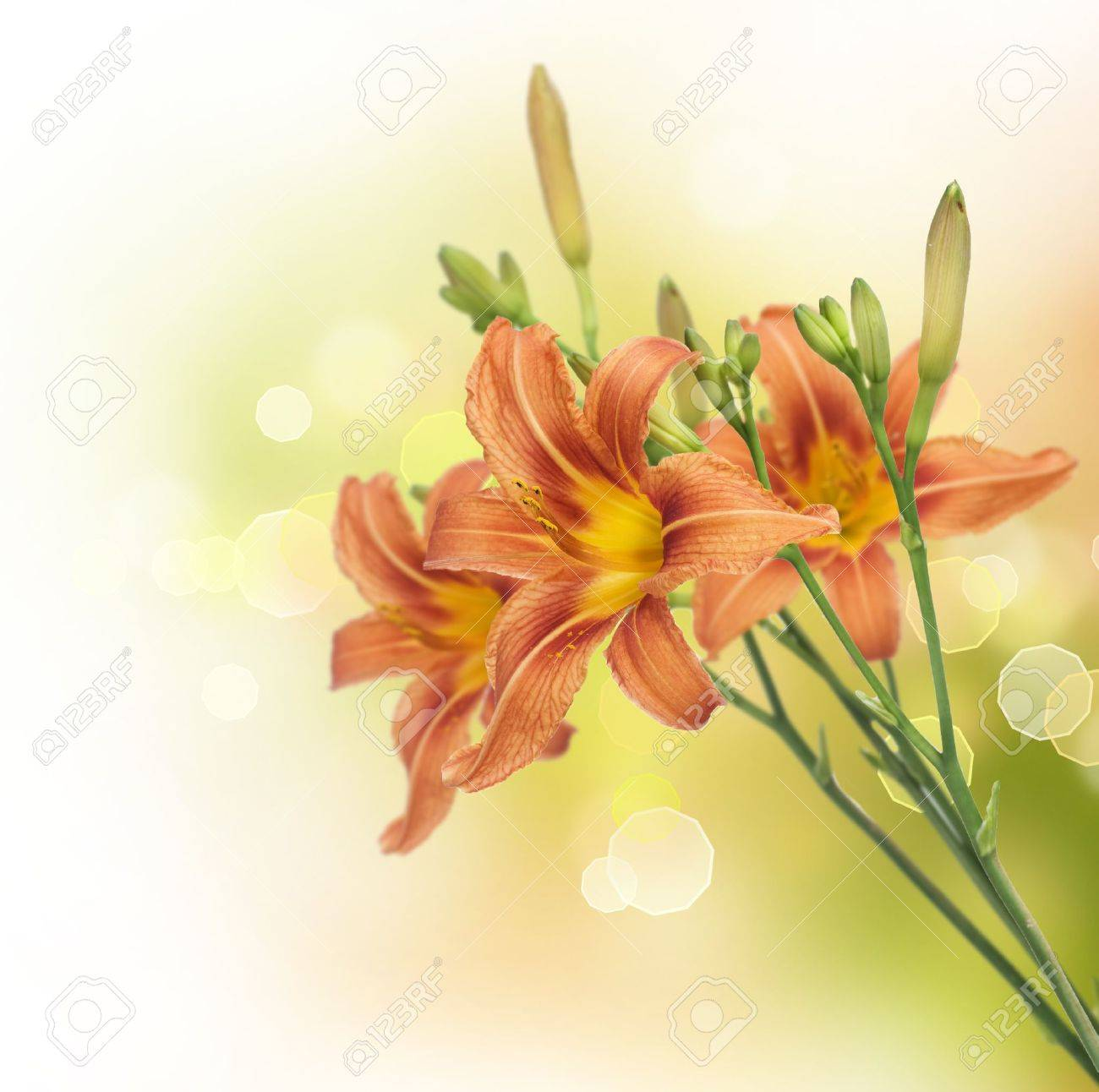 Yellow lily flower border design stock photo picture and royalty yellow lily flower border design stock photo 9829250 dhlflorist Images
