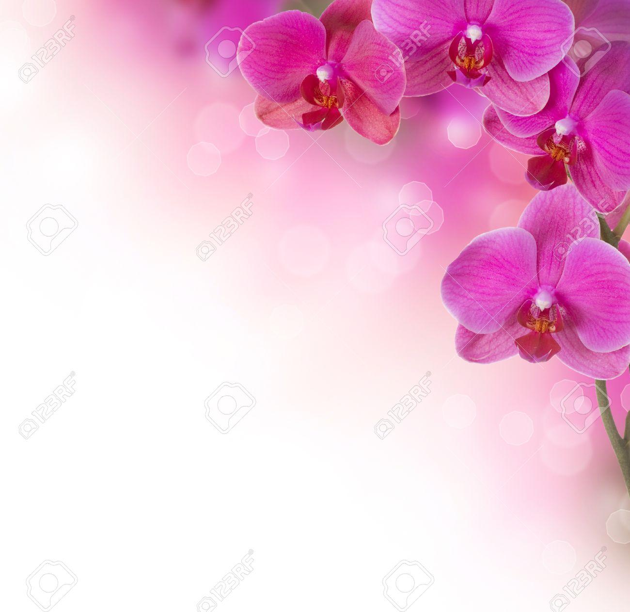 Orchid Flower border design Stock Photo - 11559860