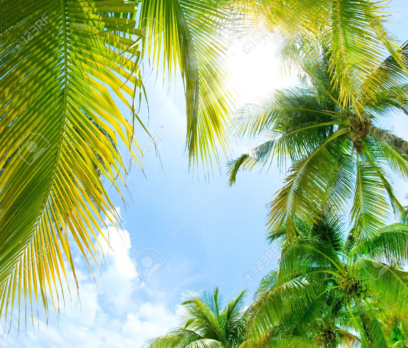 Tropical Background Stock Photo - 13684221
