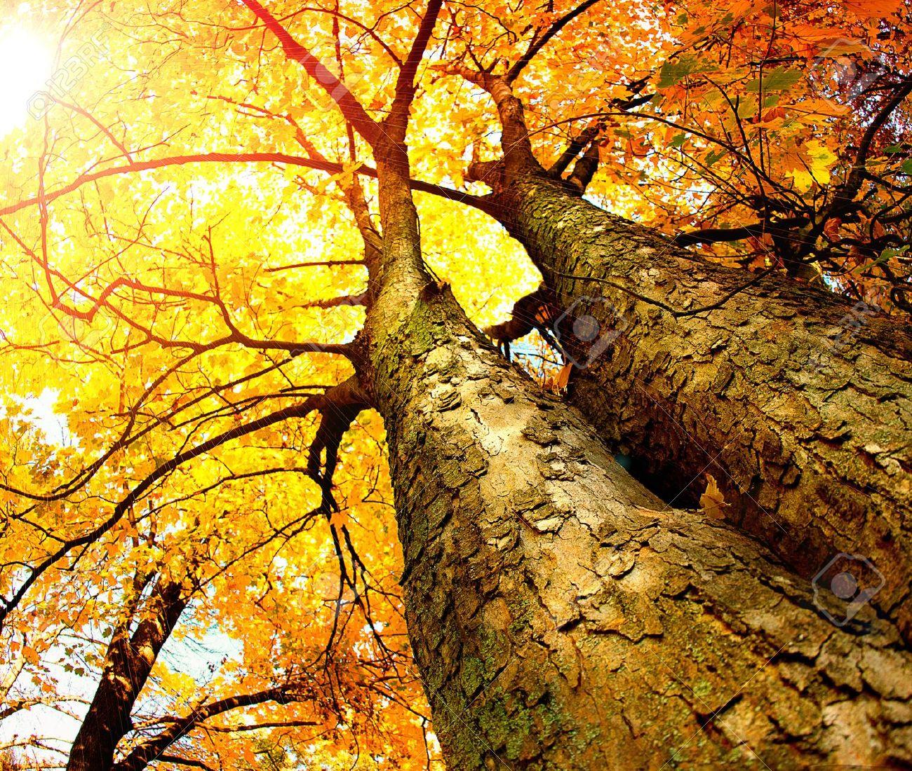 Autumn Trees  Fall Stock Photo - 16058407