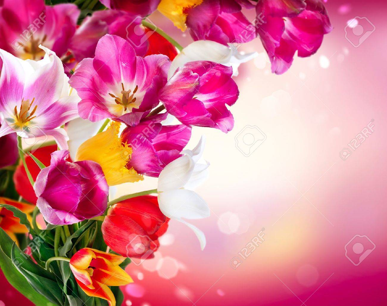 spring flowers tulips border art design stock photo picture and