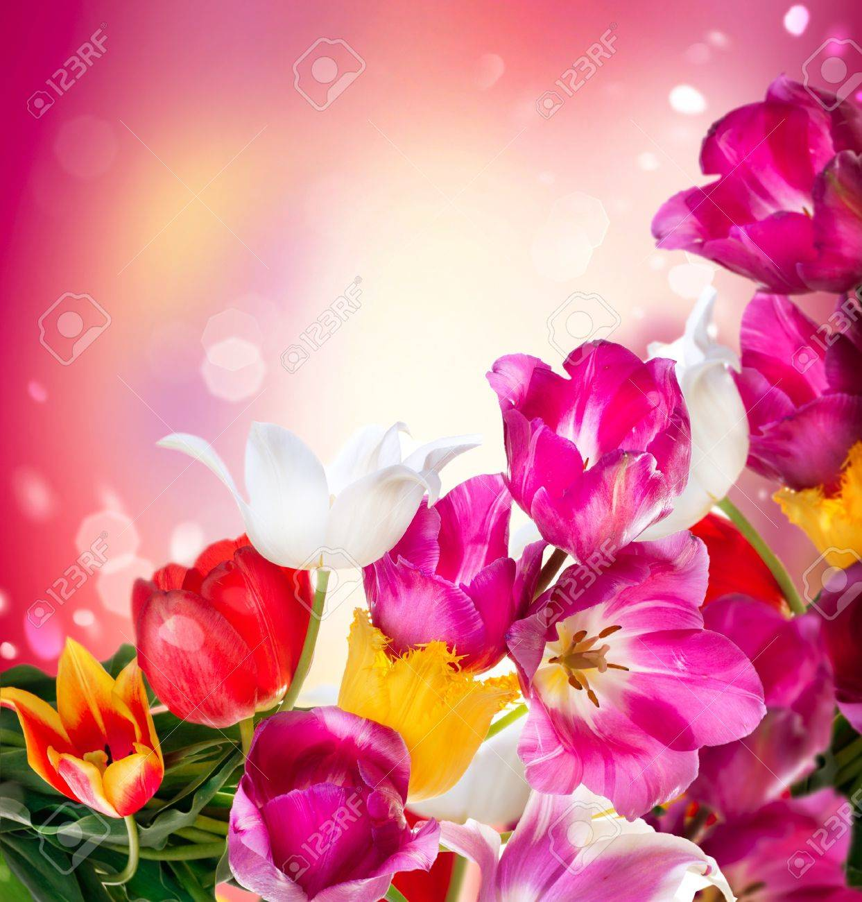 Spring flowers tulips bunch stock photo picture and royalty free spring flowers tulips bunch stock photo 18696820 mightylinksfo Image collections