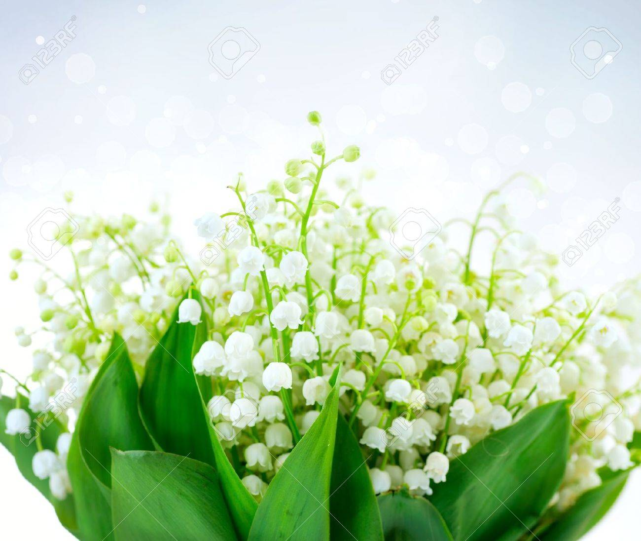 Lily of the valley flower design bunch of white spring flowers stock lily of the valley flower design bunch of white spring flowers stock photo mightylinksfo