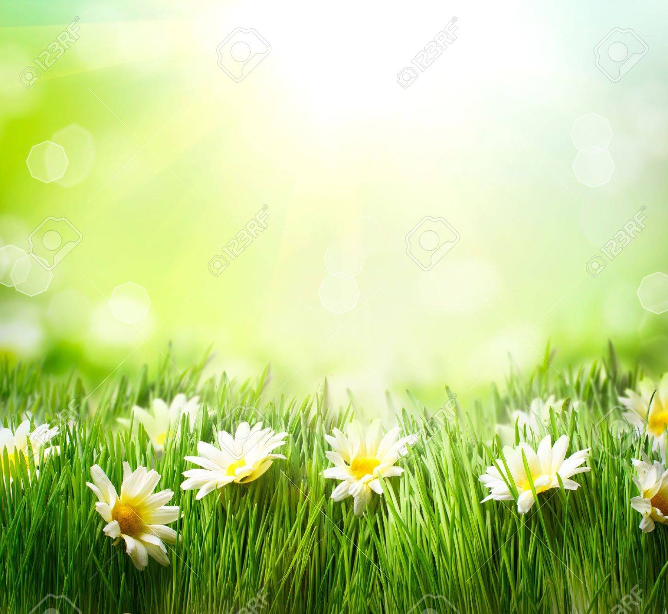 grass and flowers border.  Flowers Spring Meadow With Daisies Grass And Flowers Border Stock Photo  18892685 Inside And Border