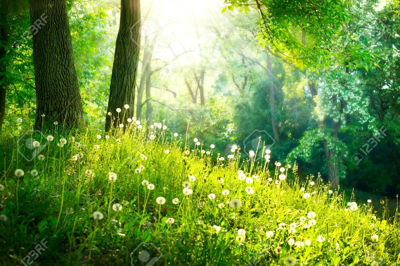 Beautiful Stock Images Spring Nature Beautiful