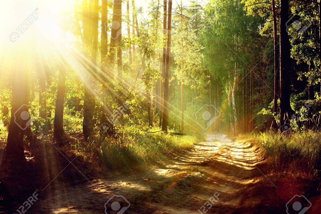 Beautiful Scene Misty Old Forest with Sun Rays, Shadows and Fog - 21749118