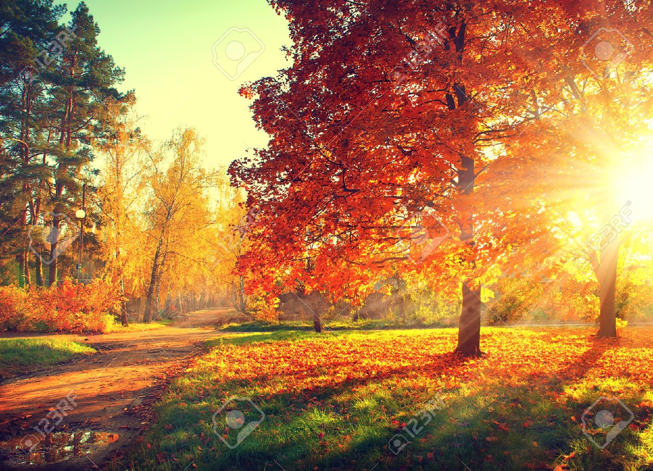 Autumn Scene Fall Trees And Leaves In Sun Light Stock Photo Picture And Royalty Free Image Image 31937235
