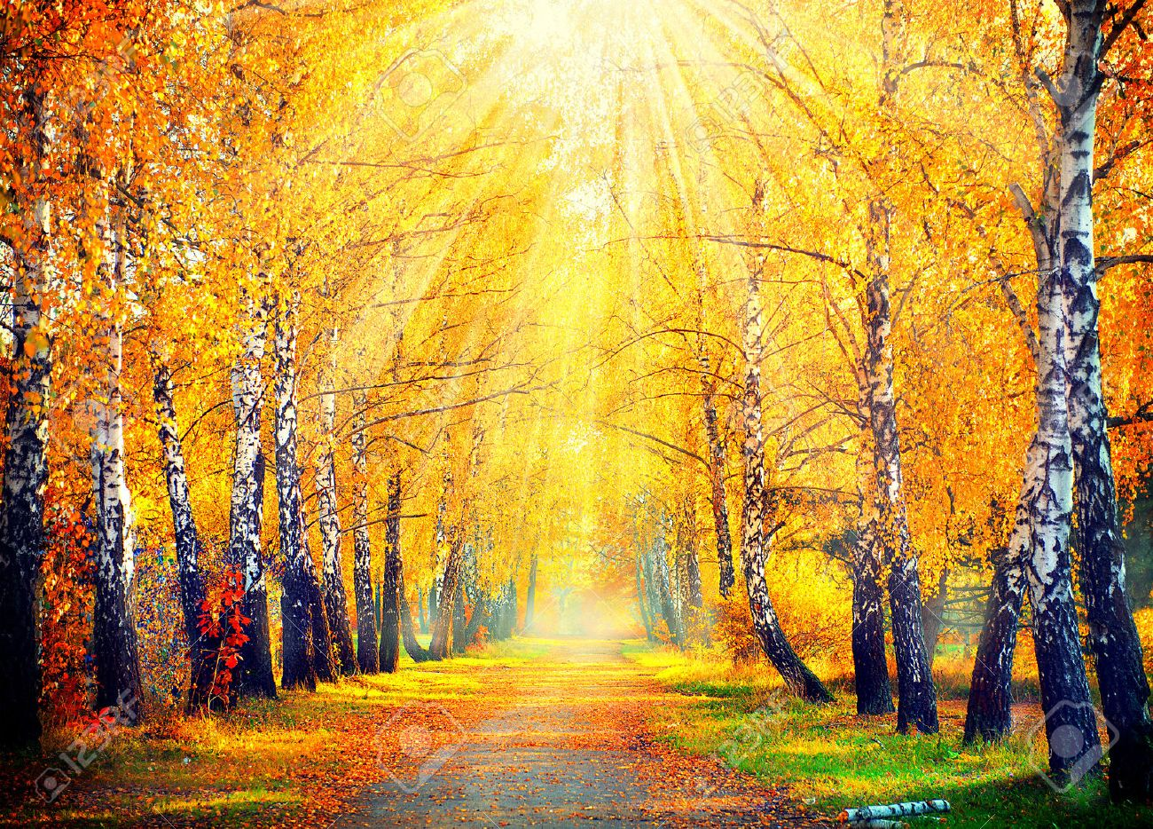 More similar stock images of 3d landscape with fall tree - Autumn Trees And Leaves In Sun Rays Stock Photo