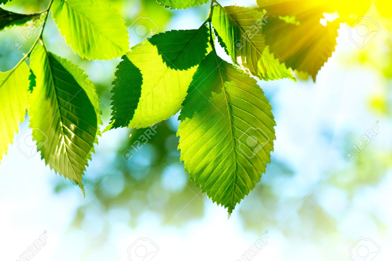 Green Mood mood images & stock pictures. royalty free mood photos and stock