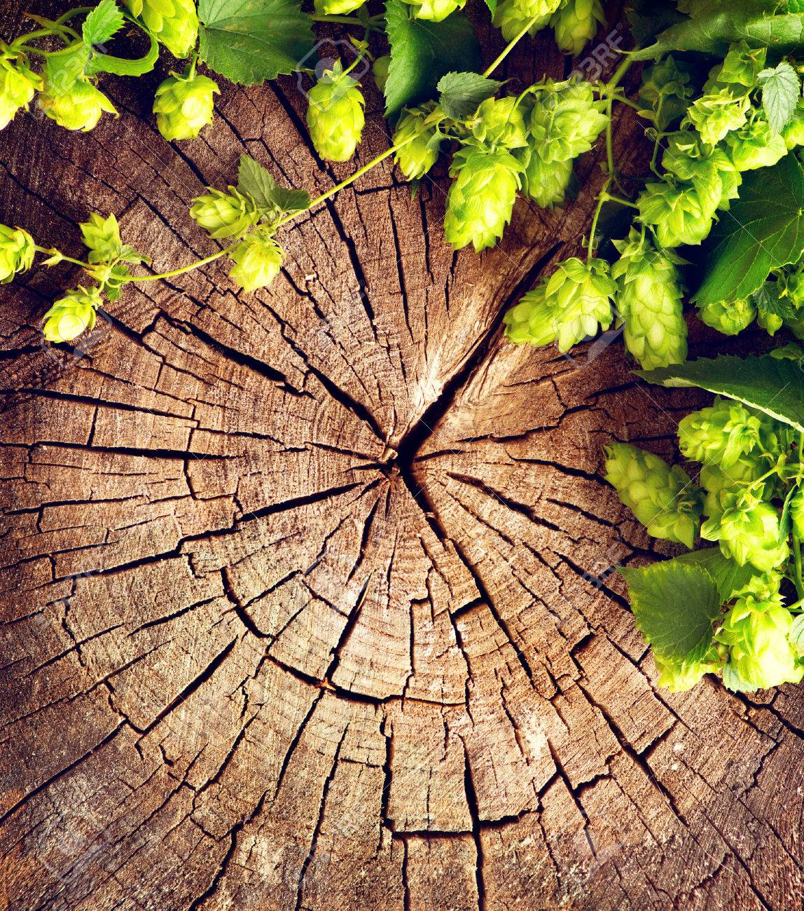 Fresh, Green Hop Branch On Cracked Wooden Background. Vintage ...