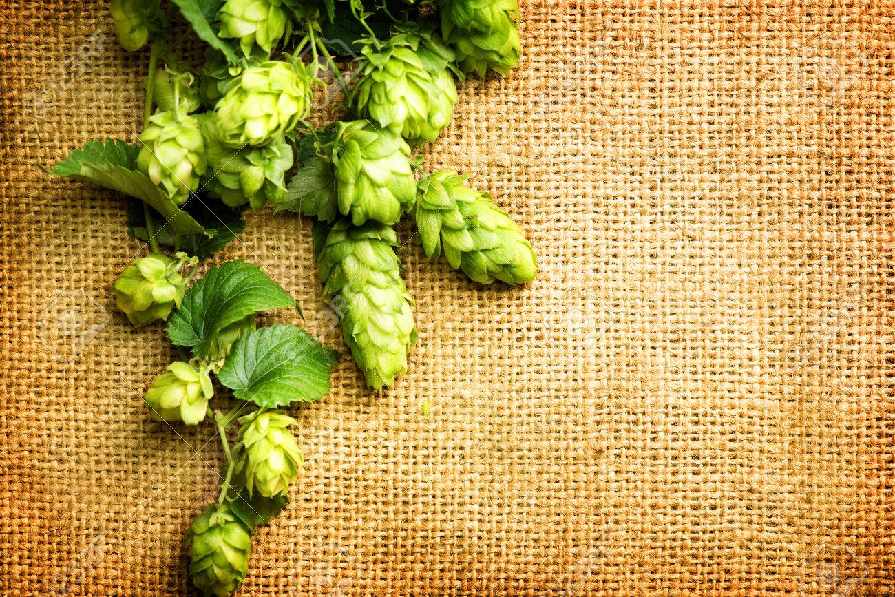 Beautiful Fresh Green Hop Over Vintage Background. Hop Cones With ...