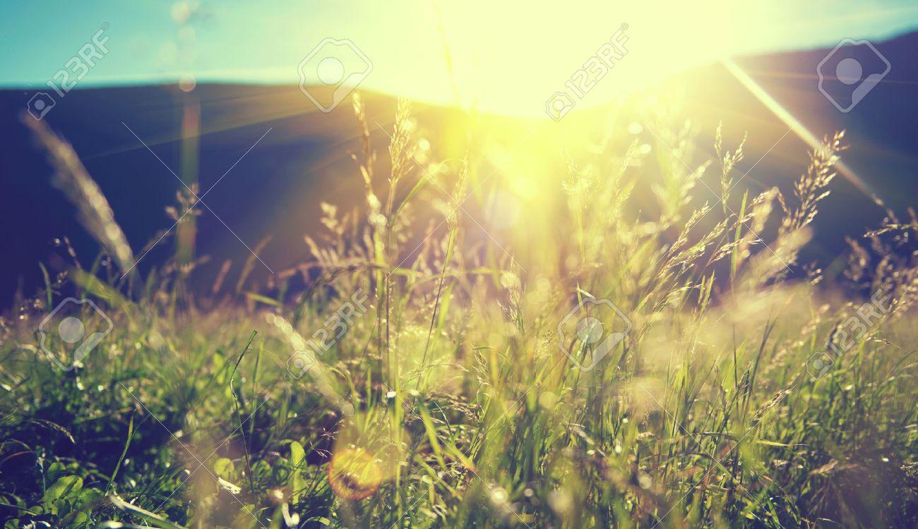 Beautiful nature landscape - Alpine meadow - 54104048