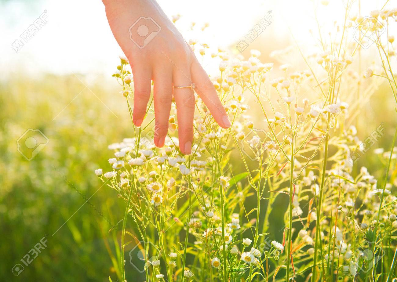 Woman hand running through meadow field with wilde flowers Banque d'images - 60087143