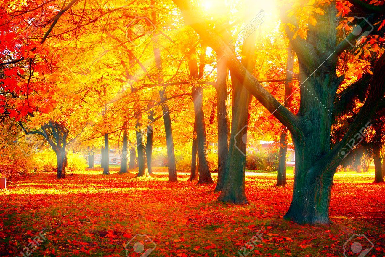 Herbst. Fall-Art-Szene. Schöne Herbstliche Park Lizenzfreie Fotos ...