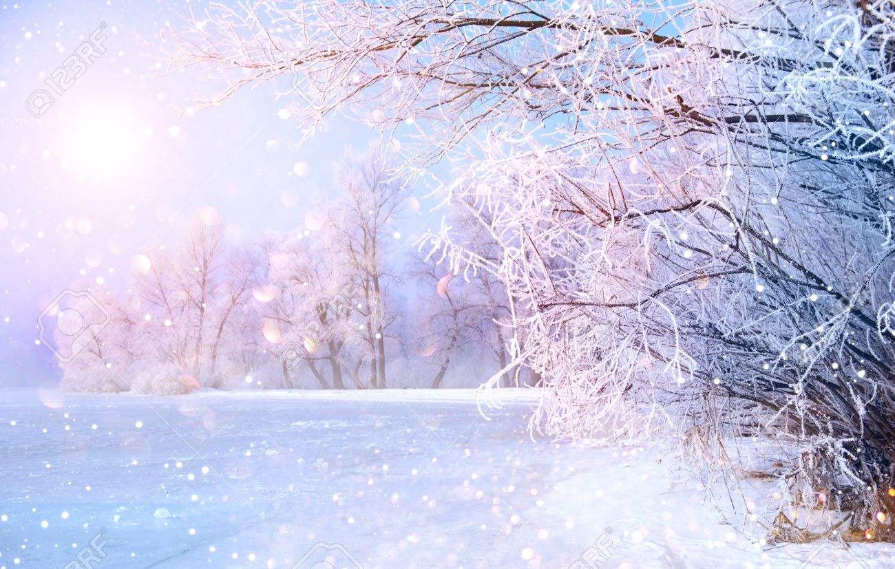 Beautiful winter landscape scene with snow covered trees and