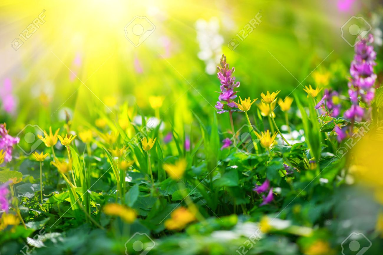 Spring wildflowers nature meadow field with wild flowers stock spring wildflowers nature meadow field with wild flowers stock photo 75720344 mightylinksfo