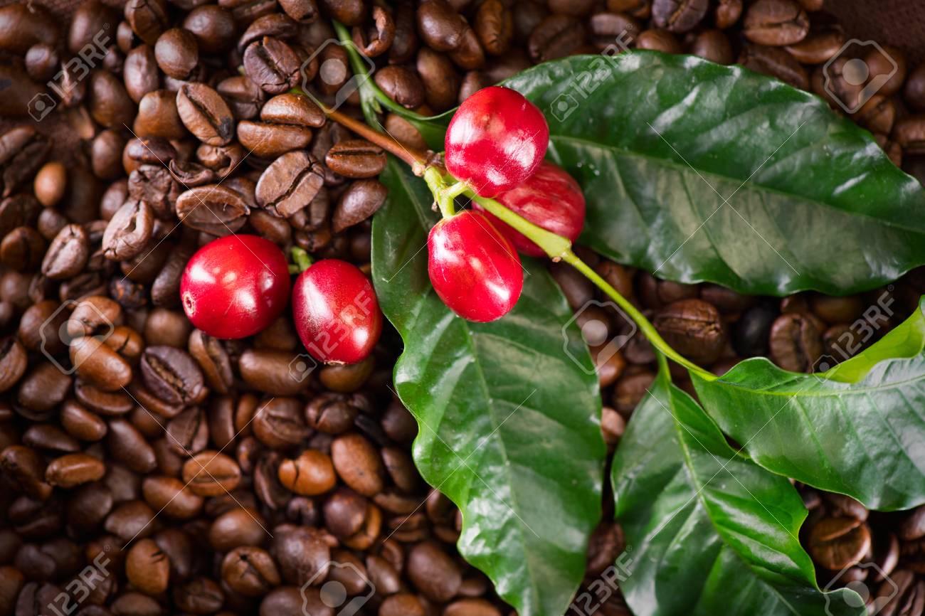 Resultado de imagen para cafe planta