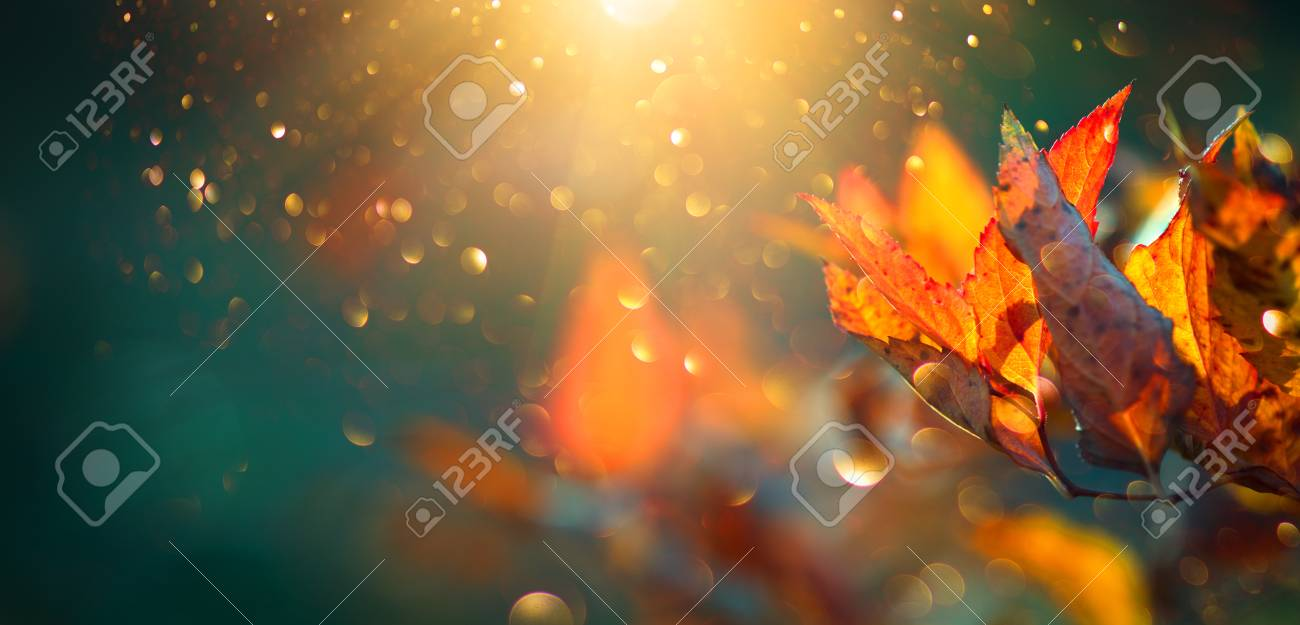 Autumn colorful bright leaves swinging in a tree in autumnal park. Autumn colorful background, fall backdrop - 112655355
