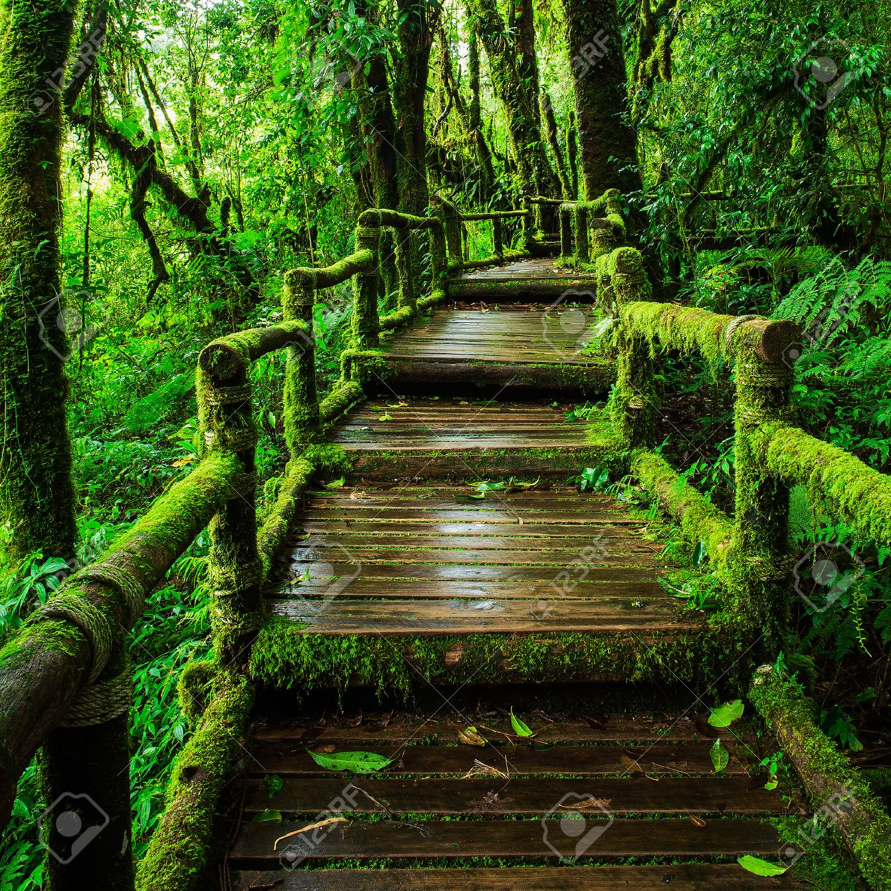 Beautiful Rain Forest At Ang Ka Nature Trail In Doi Inthanon Stock Photo Picture And Royalty Free Image Image 32055898
