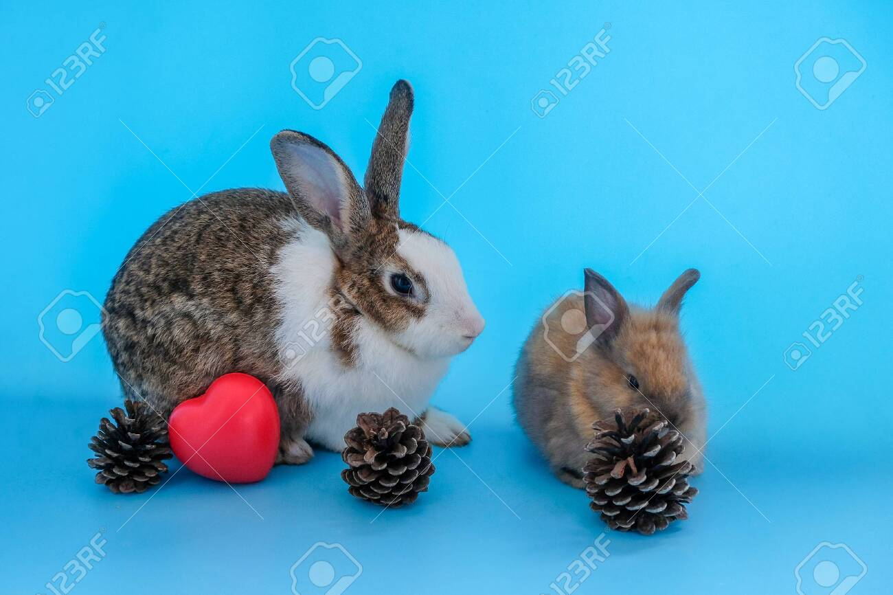 Rabbits On A Blue Background With Pine Cones And Red Hearts Stock ...